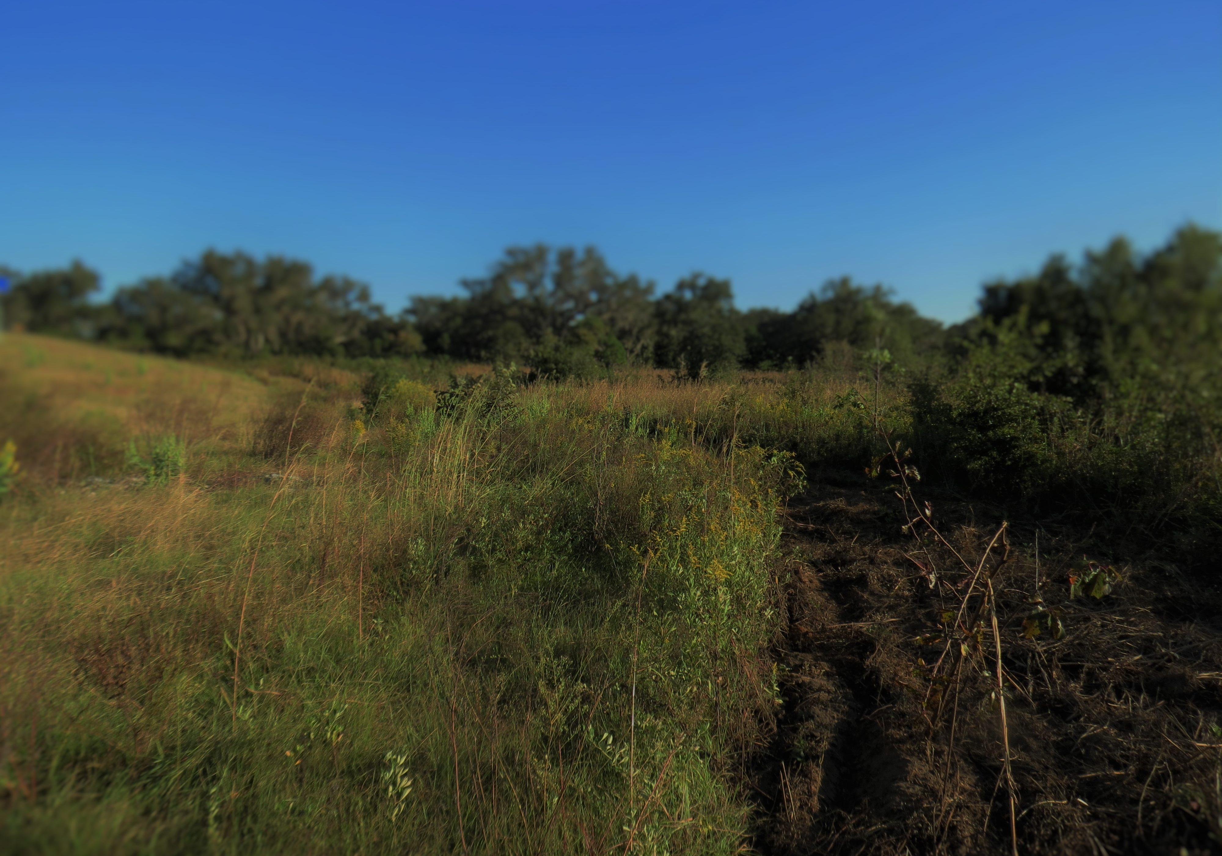 dark-lens-landscape